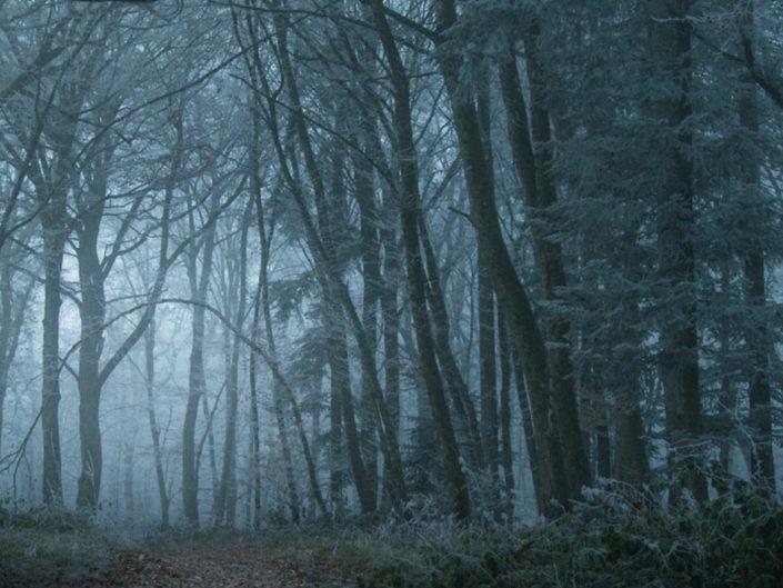 Une forêt enchantée en Franche-Comté
