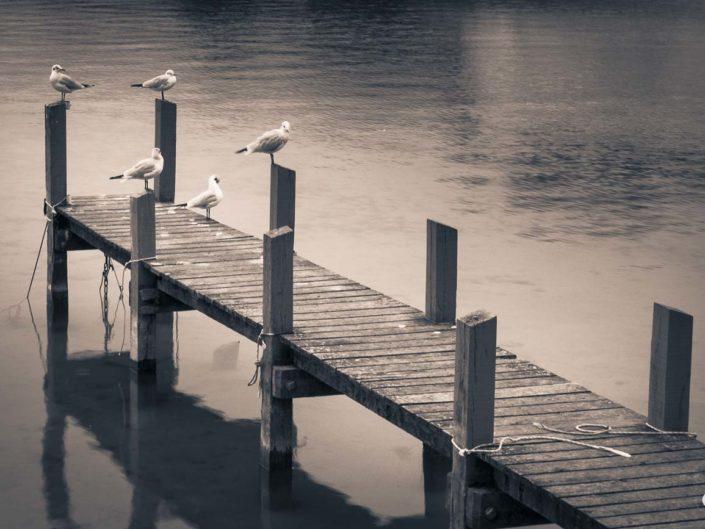 Photo virage partiel oiseaux sur ponton du lac d'Annecy